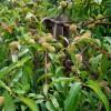 Konfitura brzoskwiniowa